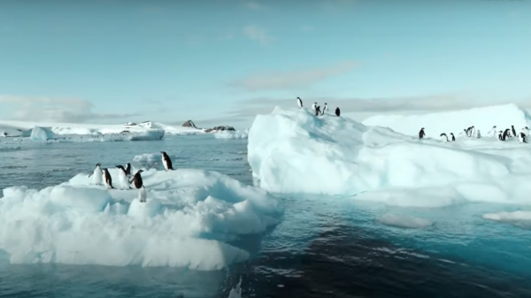 Fox's Glaciers launches new campaign